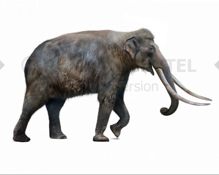 Palaeoloxodon (white background)