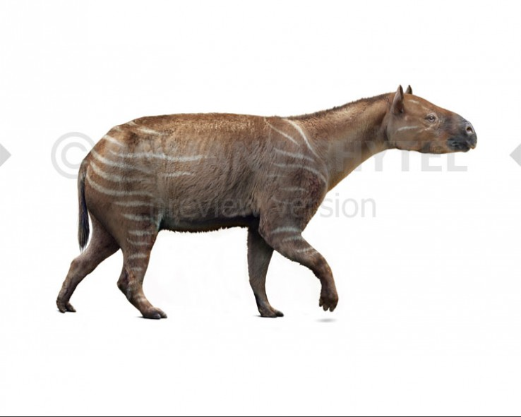 Palaeotherium (white background)