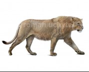 Panthera atrox (white background)