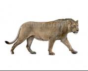 Panthera atrox (white background)