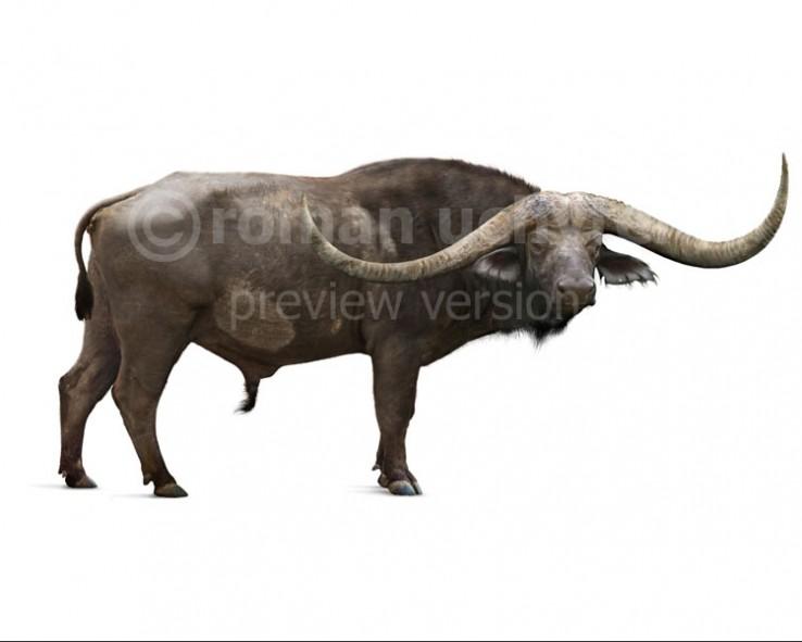 Pelorovis antiquus (white background)