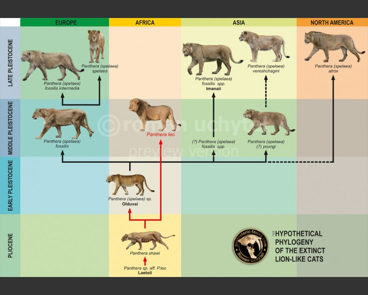 https://prehistoric-fauna.com/image/cache/data/original/Phylogeny-of-lion-like-cats-738x591.jpg