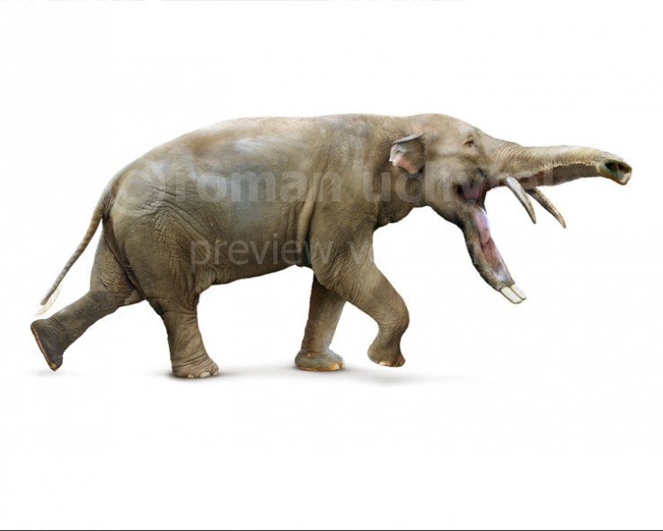 Platybelodon (white background)