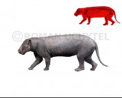 Mongolotherium (white background)