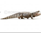 Purussaurus (white background)