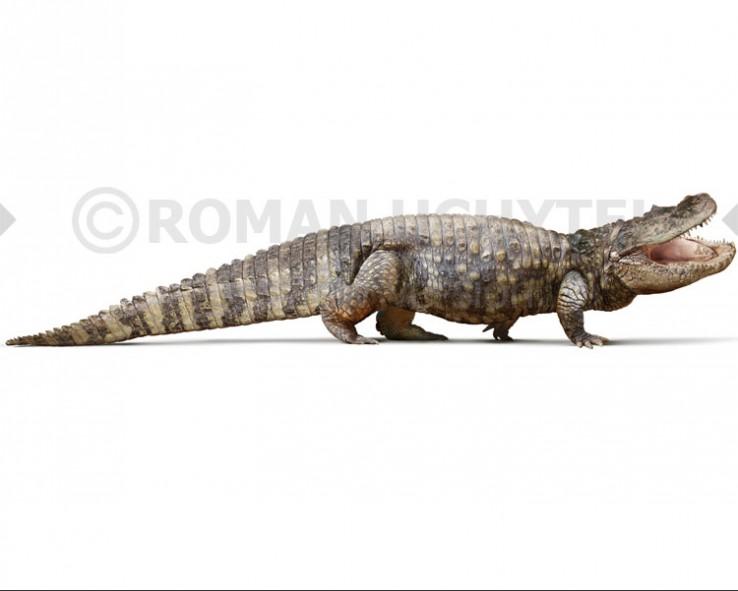Purussaurus (white background)