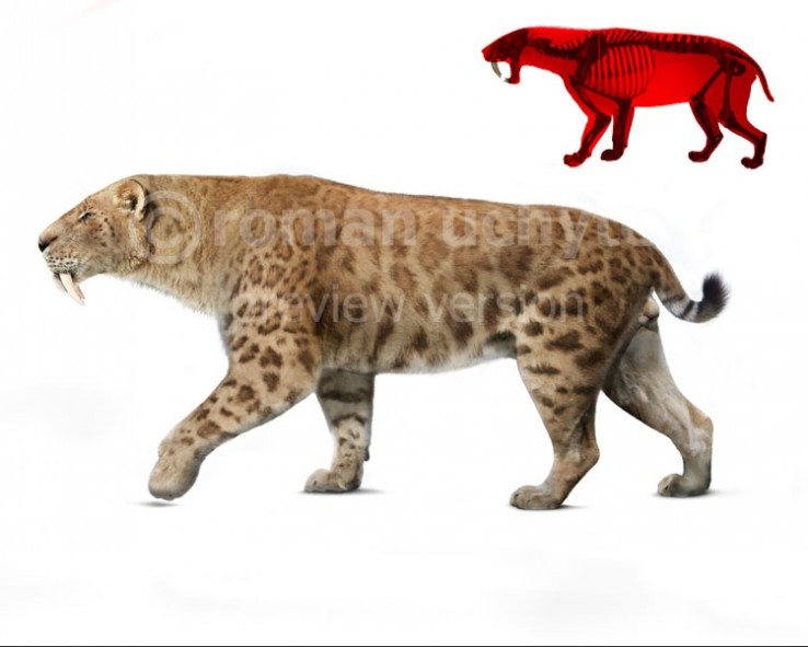 Smilodon fatalis (white background)