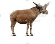 Sivatherium (white background)