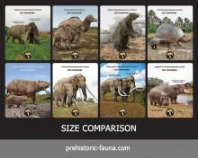 Size Comparison (Cards)