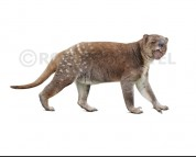 Marsupial lion (white background)