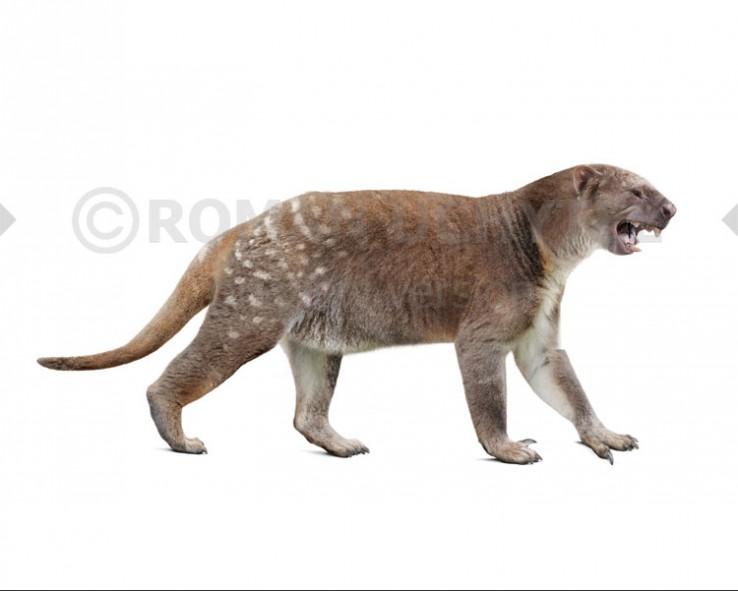 Thylacoleo carnifex (white background)