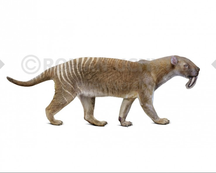 Thylacosmilus (white background)