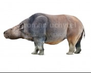 Toxodon (white background)