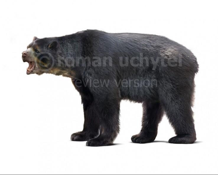 Florida short-faced bear (white background)