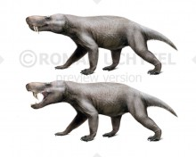 Trochosuchus