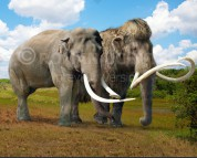 Woolly mammoth and Asian elephant (size comparison)