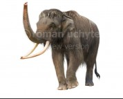 Woolly asian elephant