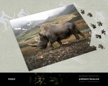 Puzzle Woolly rhinoceros