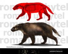 Eomellivora ursogulo (Eomellivora wimani wimani)
