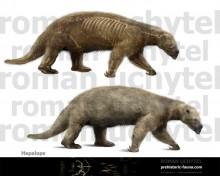 Ground sloth (Hapalops)