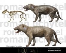 Hyaenodon horridus (old version)