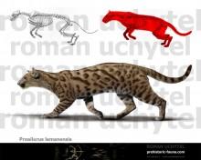 Proailurus lemanensis