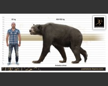 Short-faced bear (Arctodus simus)