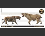 Barbourofelis fricki and Smilodon populator (size comparison)