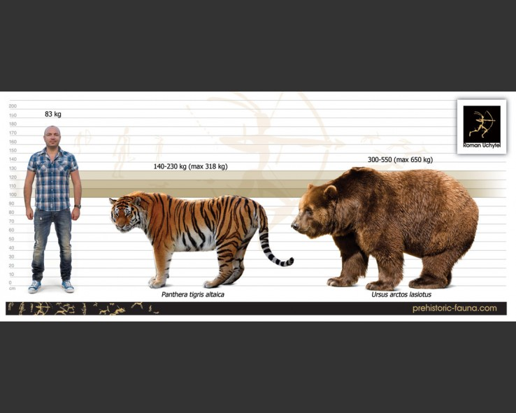 Ussuri Brown Bear Vs Grizzly Brown bear and Siberia...