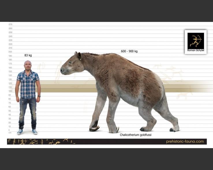 Chalicotherium Size