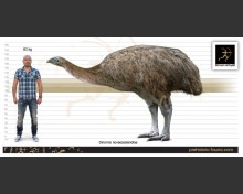 Dinornis novaezealandiae