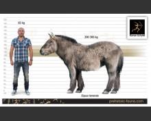 Equus lenensis