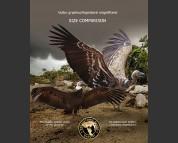Giant Teratorn and Andean condor (size comparison)