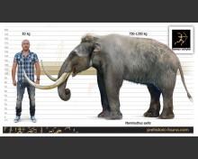 Pygmy mammoth (white background)