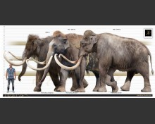 Jeffersonian Mammoth