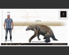 Shasta ground sloth