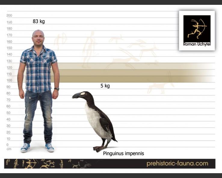 Resultado de imagem para great auk size