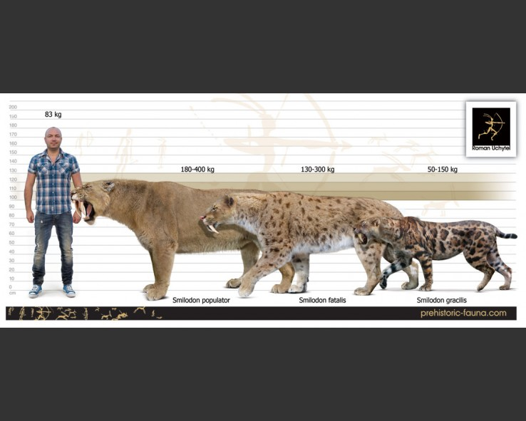 extinct smilodon Saber-toothed cat finds in the midwestern us this map shows some of the sites at which the sabertooth ( smilodon ) and the scimitar cat ( homotherium serum ) have been found in the midwestern united states.