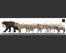 Smilodon fatalis and Arctodus simus
