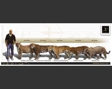 European Jaguar (Panthera gombaszoegensis)